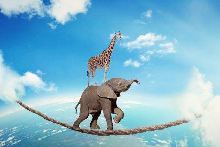 Elephant girafe