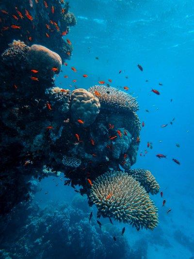 La bio-systémique : adaptabilité, créativité et équilibre